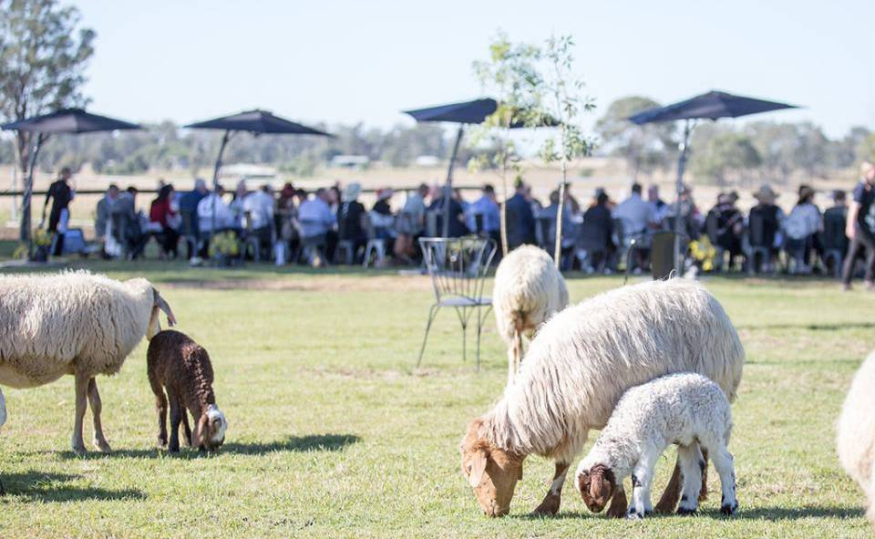 SAY CHEESE: Towri Sheep Farm events are popular during Eat Local. Photo: Supplied